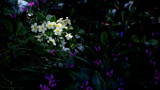 Patch of Sunlight by coram9, photography->flowers gallery