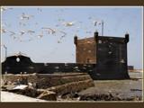 Essaouira .....the birds by fogz, Photography->Castles/Ruins gallery