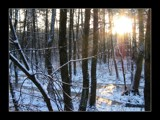 sunburst in the woods by ekowalska, Photography->Sunset/Rise gallery