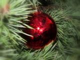 Christmas Sparkle by Pistos, holidays->christmas gallery