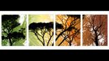 Change of Seasons by fierywonder, Illustrations->Digital gallery
