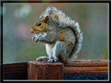 Lunch by SatCom, Photography->Animals gallery
