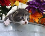 Spring Kitten by anderbre, Photography->Pets gallery