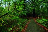 Washingwell Wood 2 by biffobear, photography->landscape gallery