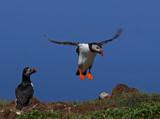 It's a lot by biffobear, photography->birds gallery