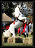 The South African Lipizzaners Nr 8 by mmynx34, Photography->Animals gallery