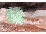 A Tree Grows On Mars by PhotoPhreak, Contests->Fantasy Landscapes gallery