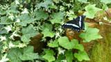 Butterfly World 2 by artytoit, photography->butterflies gallery