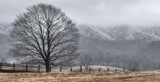 Fog, Frost and Darn Cold in Rich Valley! by nanadoo, photography->landscape gallery