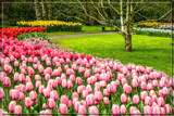 Keukenhof 10 by corngrowth, photography->gardens gallery