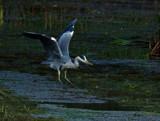It's by biffobear, photography->birds gallery