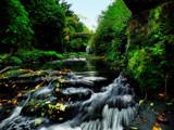 Jesmond Dene by biffobear, photography->landscape gallery