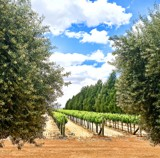 De Bortoli Winery by flanno2610, photography->landscape gallery