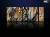 Tiger Gallery by renji, Computer->3D gallery