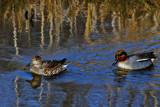 Mr & Mrs by biffobear, photography->birds gallery
