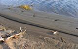Tracks of October by Nikoneer, photography->shorelines gallery