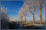 Hoar Frosted Country Road by corngrowth, Photography->Landscape gallery