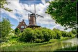 'Koornbloem' In Spring by corngrowth, photography->mills gallery