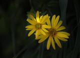 A Spot Of Sun by Jimbobedsel, photography->flowers gallery