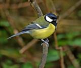 The Fat boy by biffobear, photography->birds gallery