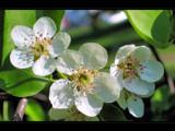 Spring trio by ekowalska, Photography->Flowers gallery