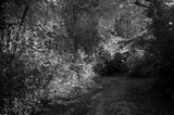 into the deep dark woods by solita17, contests->b/w challenge gallery