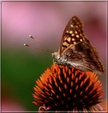 Butterflies Are Free_#9 by tigger3, photography->butterflies gallery