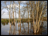 Drowned land by Dehli, Photography->Landscape gallery