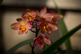 Dark Orange by Pistos, photography->flowers gallery
