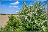 Missing Fragrance by corngrowth, photography->landscape gallery