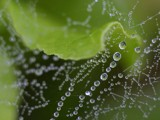 Spider web. by pom1, Photography->Macro gallery