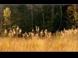 Golden daylight by Dehli, Photography->Landscape gallery