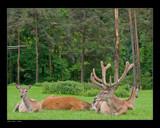 Harem by kodo34, Photography->Animals gallery