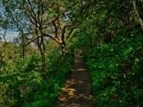 Gated Path by biffobear, photography->landscape gallery