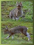 """Little Jack - Big Ears & Long Big Feet"" by icedancer, photography->animals gallery"