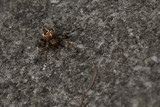 spider on concrete by jzaw, photography->insects/spiders gallery