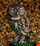 Mojo by biffobear, photography->birds gallery