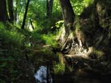 dark territory by ekowalska, Photography->Landscape gallery