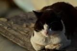 Sleepy Daisy by efeozazar, photography->animals gallery