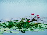 distant dreams by tee, Photography->Flowers gallery
