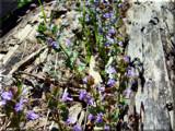Appalachian Wildflowers by Akeraios, Photography->Flowers gallery
