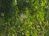 Green Infrastructure by Pjsee16, photography->insects/spiders gallery