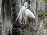Nesting  23 by 100k_xle, Photography->Birds gallery