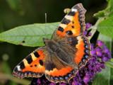 Butterfly by Paul_Gerritsen, Photography->Butterflies gallery