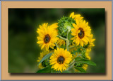 Close Together by Ramad, photography->flowers gallery