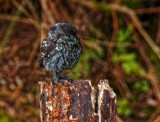 How by biffobear, photography->birds gallery