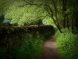 The Path... by biffobear, photography->landscape gallery