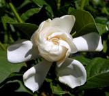 Swirls by trixxie17, photography->flowers gallery