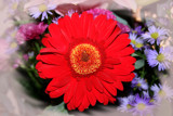 Gerbera with a lil bit of red.... by mmynx34, Photography->Flowers gallery
