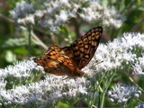 A Butterfly Day 3 by bfrank, Photography->Butterflies gallery